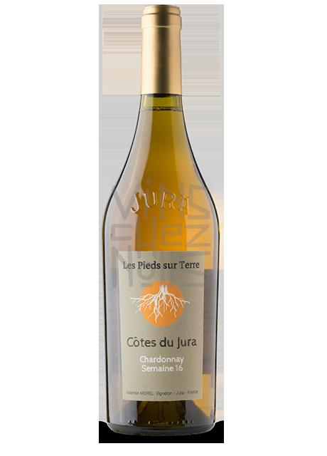 Chardonnay Semaine 16